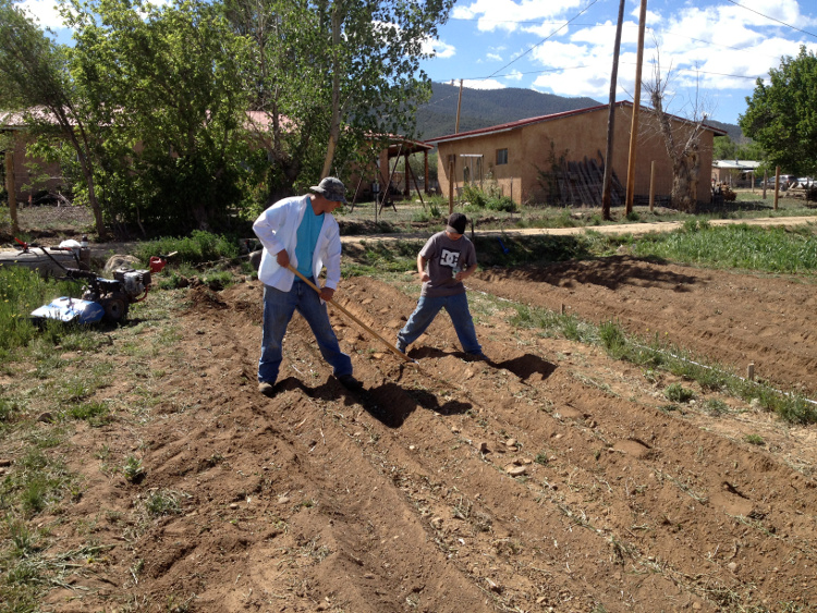 A man an son planting this years vegetable garden